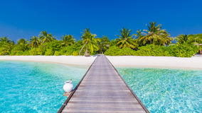 pink scallop seashell όμορφο τοπίο παραλιών σκηνή φύσης τροπική Φοίνικες και μπλε ουρανός Έννοια καλοκαιρινών διακοπών και διακοπ στοκ φωτογραφία