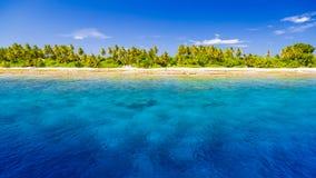 pink scallop seashell ландшафт пляжа красивейший место природы тропическое Пальмы и голубое небо Концепция летнего отпуска и кани Стоковая Фотография RF