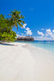pink scallop seashell ландшафт пляжа красивейший место природы тропическое Пальмы и голубое небо Концепция летнего отпуска и кани Стоковое Фото