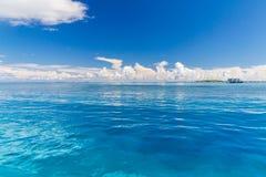 pink scallop seashell ландшафт пляжа красивейший место природы тропическое Пальмы и голубое небо Концепция летнего отпуска и кани Стоковые Фото