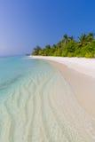 pink scallop seashell ландшафт пляжа красивейший место природы тропическое Пальмы и голубое небо Концепция летнего отпуска и кани Стоковое Изображение RF