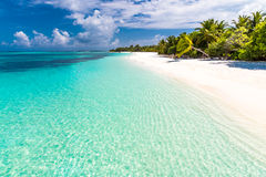 pink scallop seashell ландшафт пляжа красивейший место природы тропическое Пальмы и голубое небо Концепция летнего отпуска и кани Стоковое фото RF