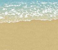 pink scallop seashell 夏天 免版税库存照片