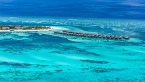 pink scallop seashell 海滩美好的横向 热带本质的场面 棕榈树和蓝天 暑假和假期概念 免版税图库摄影