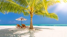 pink scallop seashell 海滩美好的横向 热带本质的场面 棕榈树和蓝天 暑假和假期概念 图库摄影
