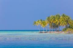 pink scallop seashell 海滩美好的横向 热带本质的场面 棕榈树和蓝天 暑假和假期概念 免版税库存图片