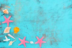 pink scallop seashell στοκ εικόνες με δικαίωμα ελεύθερης χρήσης