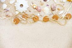 pink scallop seashell στοκ εικόνα