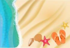 pink scallop seashell 免版税图库摄影
