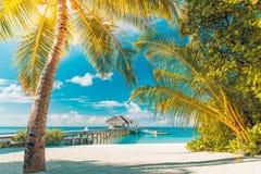 pink scallop seashell härlig liggande för strand tropisk naturplats Palmträd och blåttsky Sommarferie och semesterbegrepp Arkivbilder