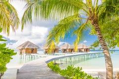 pink scallop seashell härlig liggande för strand tropisk naturplats Palmträd och blåttsky Sommarferie och semesterbegrepp Royaltyfria Bilder