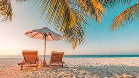 pink scallop seashell härlig liggande för strand tropisk naturplats Palmträd och blåttsky Sommarferie och semesterbegrepp royaltyfri fotografi