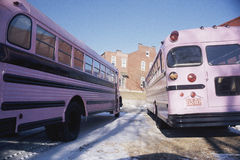 Pink school buses Stock Photography