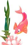 Pink sea fish and anemone Stock Photo