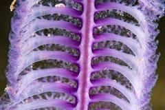 Pink sea pen underwater close up macro detail Stock Image