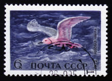 pink seagull, series animals, circa 1972 Royalty Free Stock Photo