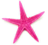 Pink seastar, isolated on white background Stock Photography