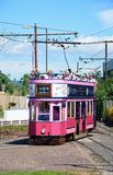 Pink Seaton tram. Stock Images