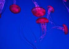 Pink Seaweeds Stock Photo