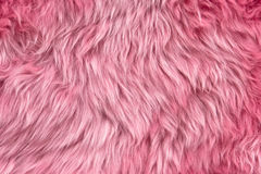 Pink sheepskin Royalty Free Stock Image