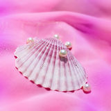 Pink shell Stock Images