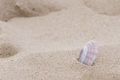 A pink shell on Bournemouth Beach. A pink shell isolated in the sand at Bournemouth beach, Dorset UK Royalty Free Stock Image