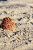 Pink shell in sand. Pink shell on edge in sand Stock Images