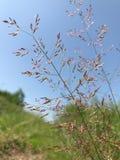 Pink and shining wild grass stock photos