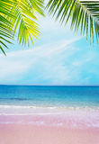 Pink shore under palm branches on a clear day Royalty Free Stock Image