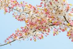 Pink shower blossom Stock Photos
