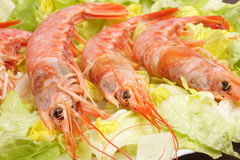 Pink shrimp 4. Close-up of three prawns on a bed of green lettuce stock photo