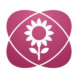 Pink sign sunflower Royalty Free Stock Image