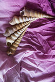 Pink silk with shell copy space Stock Image