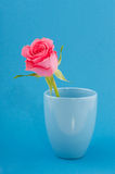 Pink single rose on blue Stock Photography