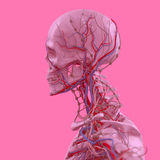 Pink skeleton on fun pink studio background. Graphic,design,modern. Stock Photography