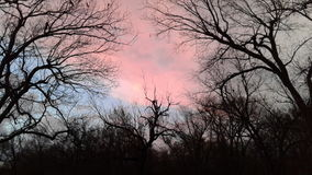 Pink skies. Pink clouds after a hail storm royalty free stock photography