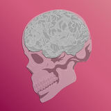 Pink Skull and brain Royalty Free Stock Images