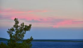 Pink Sky Sunset Sea Windy. Beautiful pink sky at sunset on very windy day at see with blurred pine tree Stock Photo