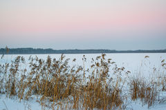 Pink sky in winter at sunset with reeds Stock Photos