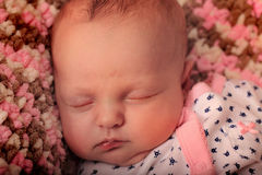 Pink Sleeping Newborn Stock Photography