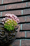 Pink small flowers in a pot hanging on brick wall. Pink small flowers in a pot hangingon brick wall Stock Images