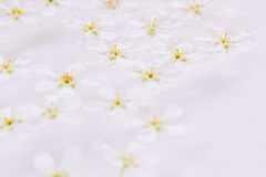 Pink small flowers on the water. Floral pattern. Wedding, spring background. Macro. Royalty Free Stock Images