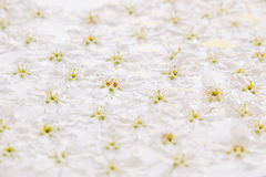 Pink small flowers on the water. Floral pattern. Wedding, spring background. Stock Photos