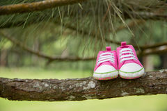 Pink sneaker, toddler shoes, in a branch, nature concept background. Pair pink sneaker, toddler shoes, in a branch, nature concept background stock images