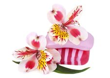 Pink soap and orchid Stock Images