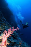 Pink soft coral and scuba divers in background Stock Photos