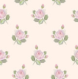 Pink soft roses Royalty Free Stock Photos
