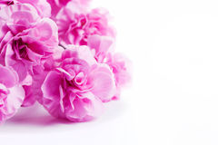 Pink soft spring flowers bouquet on white background. Pink soft flowers bouquet on white background. Spring, celebration royalty free stock photo