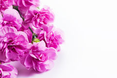 Pink soft spring flowers bouquet on white background Royalty Free Stock Photos