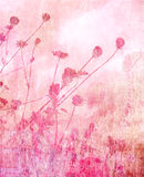 Pink soft summer meadow background Royalty Free Stock Photo